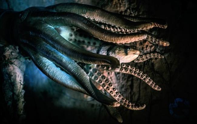 Ученые выяснили, как экстази влияет на поведение осьминога