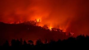 В пожарах в США трагически погибло 59 человек, часть тел сгорела до неузнаваемости, 130 пропали без вести — СМИ