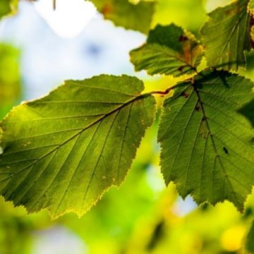 Созданы искусственные листья для эффективной очистки воздуха