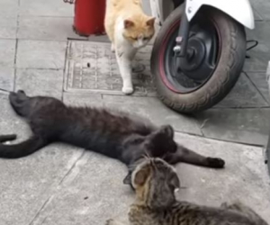 Кот «поймал» кошку с любовником: реакции животных ошеломила — видео стало настоящим хитом Сети